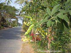 drug treatment centers thailand